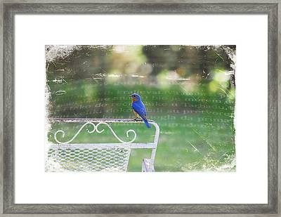 Watchful Bird Framed Print