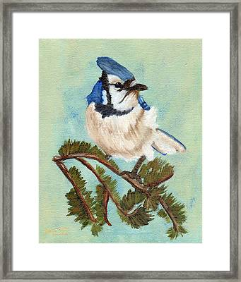Watchful Blue Jay Framed Print
