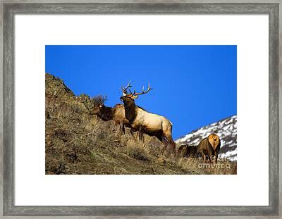 Watchful Bull Framed Print by Mike  Dawson
