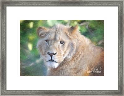 Watchful Eye Framed Print by Jayne Carney