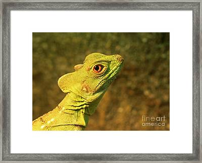 Watchful Eye Of The Green Basilisk Lizard  Framed Print by Inspired Nature Photography Fine Art Photography