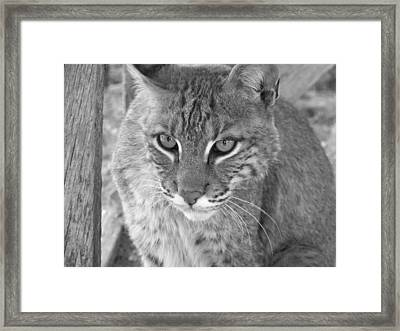 Watchful Eyes Black And White Framed Print by Jennifer  King