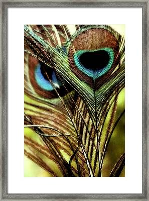 Watchful Eyes Framed Print by Darlene Kwiatkowski