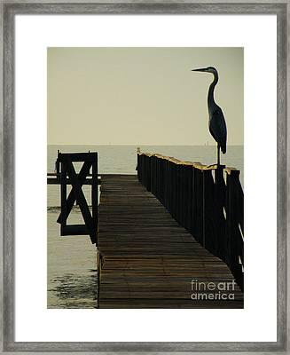 Watchful Eyes Framed Print by Joe Jake Pratt