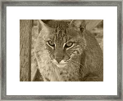 Watchful Eyes-sepia Framed Print by Jennifer  King