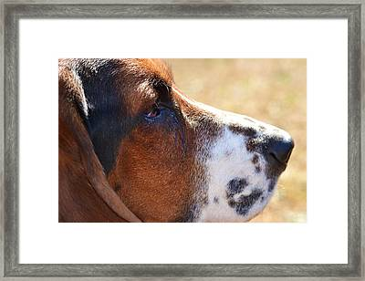 Framed Print featuring the photograph Watchful by Mary Zeman
