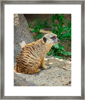 Watchful Meerkat Vertical Framed Print by Jon Woodhams