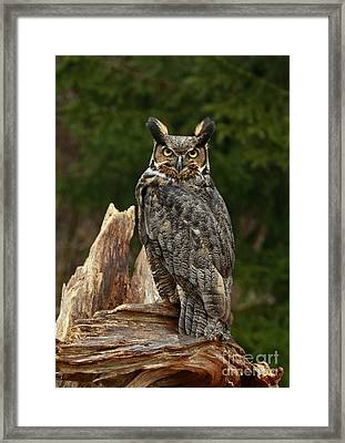 Watchful Moments  Framed Print by Inspired Nature Photography Fine Art Photography