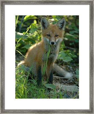 Framed Print featuring the photograph Watchful  by Sandra Updyke