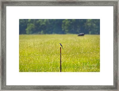 Watchful Shrike Framed Print by Stuart Mcdaniel