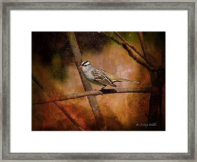 Watchful White-crowned Sparrow Framed Print