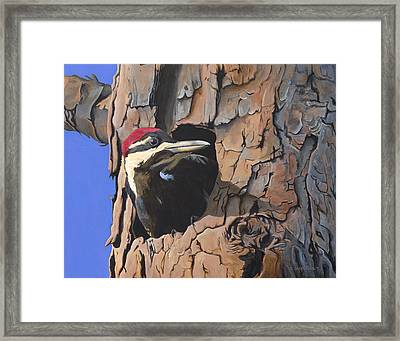 Watchful Woodpecker Framed Print by Kirsten Wahlquist