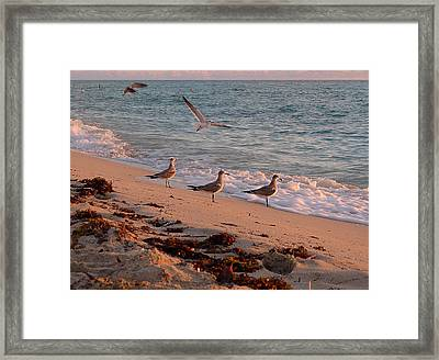 Watchin' The Waves Roll In Framed Print by Richard Reeve