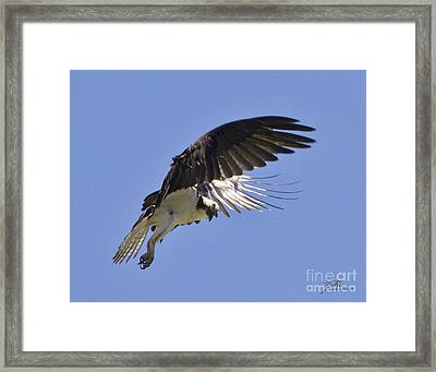 Framed Print featuring the photograph Watching 4 by Suzette Kallen