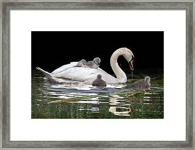 Watching And Learning Framed Print