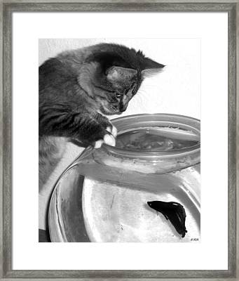 Watching Beta Framed Print by Heidi Manly