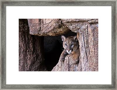Framed Print featuring the photograph Watching by Beverly Parks