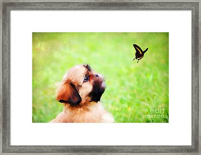 Watching Butterflies Framed Print by Darren Fisher