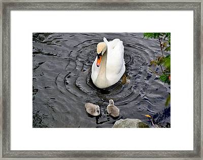 Watching Closely Framed Print