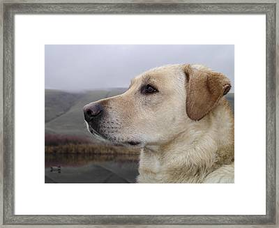 Watching For Ducks Framed Print by Jean Noren