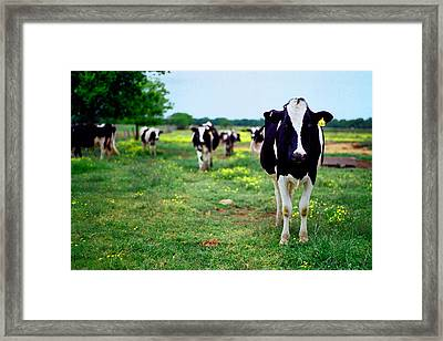 Watching Me Framed Print by Linda Unger