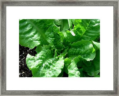 Watching My Lettuce Grow Framed Print by James Temple