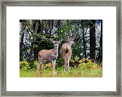 Watching Out For Mom Framed Print