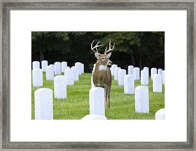Watching Over Departed Souls Framed Print by Bill Tiepelman