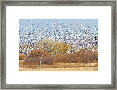 Framed Print featuring the photograph Watching Over The Flock by Bryan Keil