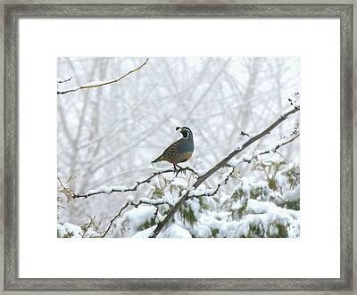Watching Over The Flock Framed Print