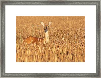 Watching Quietly Framed Print by Sarah Boyd