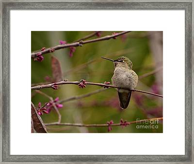 Watching Spring Arrive Framed Print