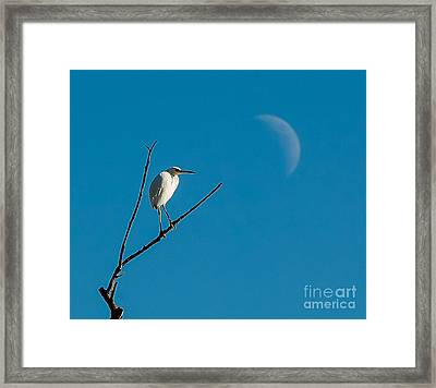 Watching The Moon Framed Print