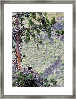 Watching The Nest Framed Print by Mike  Dawson