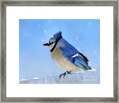 Watching The Snow Framed Print by Betty LaRue