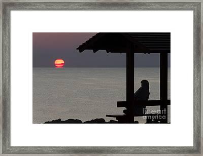 Watching The Sun Melting Framed Print