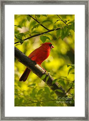 Watching The Sun Set Framed Print by Lois Bryan