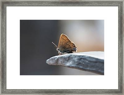 Framed Print featuring the photograph Watching The World  by Jeanne May
