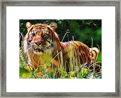 Framed Print featuring the photograph Watching You... by Al Fritz