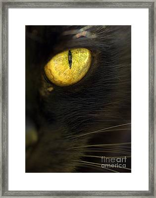Watching You Framed Print by Anne Gilbert