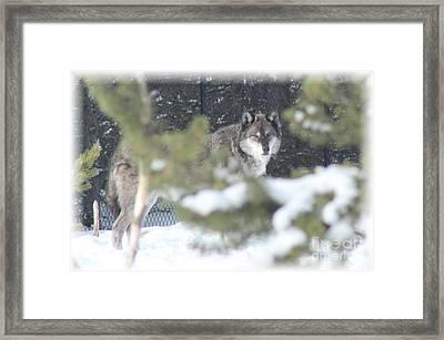 Watching You Framed Print by Brenda Henley