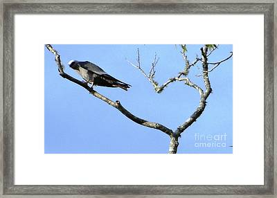 Framed Print featuring the photograph Watching You Like A Hawk by Ecinja Art Works