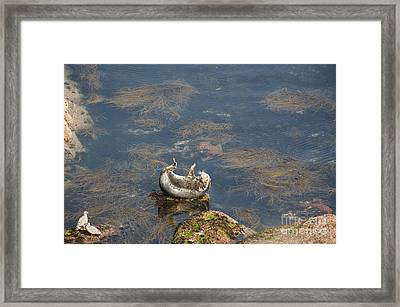 Watching You Watching Me Framed Print by Anne Gilbert