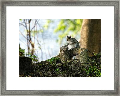 Watching You Watching Me Framed Print by Bob Orsillo