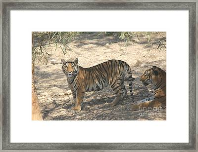 Watching You Watching Me Framed Print by David Grant
