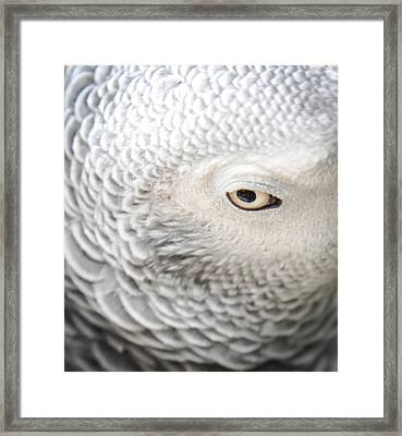 Watching You Watching Me Framed Print by Karen Wiles