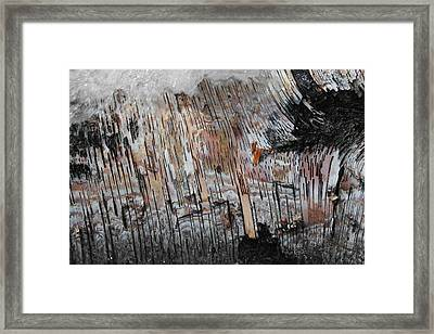 Water And Birch Framed Print