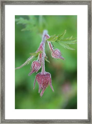 Water Aven Framed Print by Mark Severn