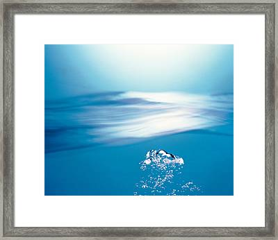 Water Bubbles Rising To Surface Framed Print by Panoramic Images