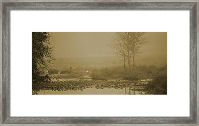 Water Buffalo And Egret Framed Print by Frank Feliciano